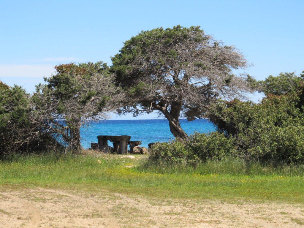 Steinbänke und Olivenbäume an einer Bucht